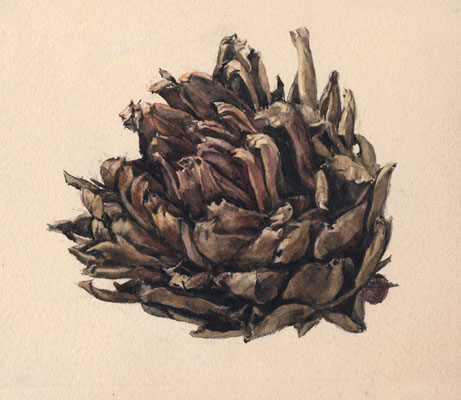 Watercolor of an artichoke