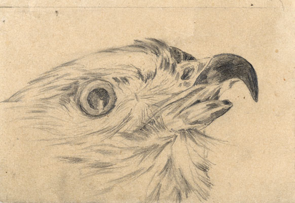 Sketch of a bird's head